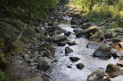 石头河水自然森林 免版税库存照片