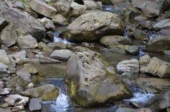 石头河水自然森林 库存照片