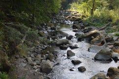 石头河水自然森林 库存图片