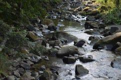 石头河水自然森林 免版税库存图片