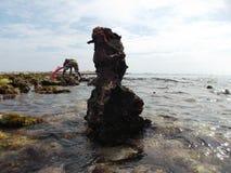 石头用在海龟岛海岸的海草盖了在委内瑞拉 库存图片