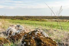 石头用青苔、石头和干草盖以一个绿色领域和森林为背景 免版税库存图片