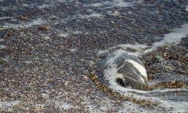 石头由在岸的海水洗涤 免版税库存图片