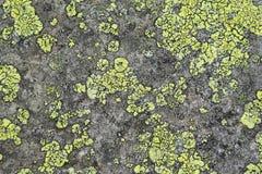 石头的纹理与地衣的 免版税库存图片