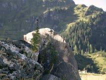 石头细节用草本,花 风景高山岩石高山谷 库存照片