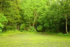 石头被铺的路在森林里 免版税库存照片
