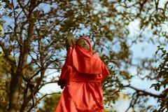 石头被雕刻的佛教雕象在红色围嘴穿衣在著名Senso籍寺庙在浅草,东京,日本 免版税库存照片
