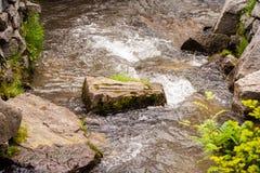 石头长满与草在山小河中间 流动的水和许多石头 免版税库存图片