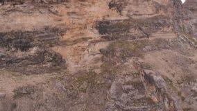 石山羊牧群的空中射击跑在一座陡峭的山的 影视素材