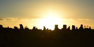 石峰在日落的沙漠剪影 Nambung国家公园 西万提斯 澳大利亚西部 澳洲 免版税库存照片