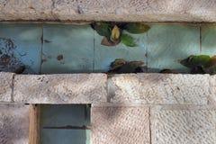 石平板的抽象难看的东西背景与蓝色瓦片长方形的,水流量和绿色叶子说谎 库存图片