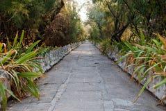 石平板道路在灌木和树中的 免版税库存照片