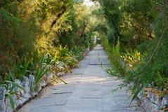 石平板道路在灌木和树中的 免版税库存图片