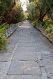 石平板道路在灌木和树中的 库存图片