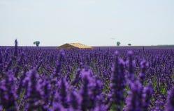 石房子在淡紫色海在南法国 库存图片