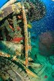 石斑鱼和glassfish在水下的残骸附近 库存图片