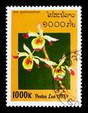石斛兰属gratiossissimum,兰花serie,大约1997年 免版税库存照片