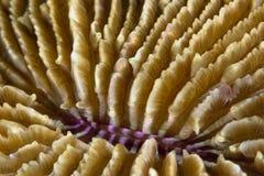 石板材珊瑚的细节图象 免版税库存照片