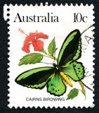 石标Birdwing蝴蝶澳大利亚邮票 库存照片
