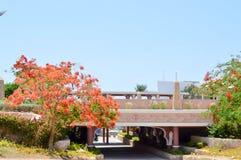 石桥梁,风景,植被,与红色开花的花的Delonix皇家树,与绿色的棕榈树在一热带resor离开 免版税库存图片