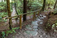 石森林足迹在山森林里 免版税库存图片