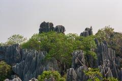 石森林 免版税库存照片