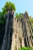 石森林 图库摄影