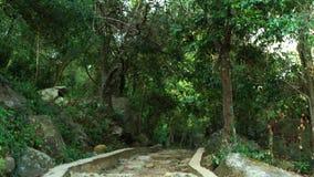 石楼梯下来在热带树和植物中在自然公园 老和被破坏的楼梯在走的公园 石 股票视频