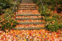 石楼梯充满五颜六色的秋叶 图库摄影