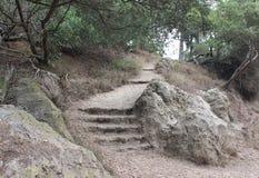 石楼梯和森林道路 图库摄影