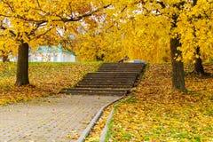 石楼梯在公园撒布与黄色秋叶 秋天横向 图库摄影