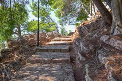 石楼梯在杉木森林阳光下在石步落 免版税库存图片