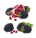 石榴在白色背景隔绝的黑莓集合 库存图片