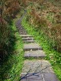 石步骤 图库摄影
