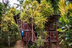 石河床在一个豪华的绿色密林 图库摄影