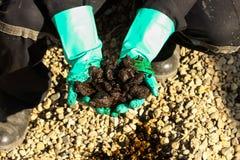 从石油钻井区的油砂发展 在油砂的手 操作员作为从我的油砂s样品 免版税库存照片