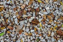 石渣和叶子背景 免版税图库摄影