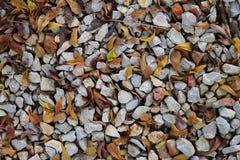 石渣和叶子背景 库存照片