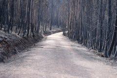 石渣路低谷被烧的森林 库存照片