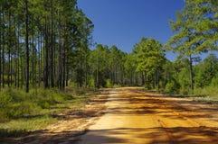 石渣路到湖Talquin国家公园和森林塔拉哈西,佛罗里达里 图库摄影