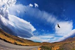 石渣路和安第斯秃鹰 免版税图库摄影