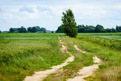 石渣路在夏天乡下 库存照片