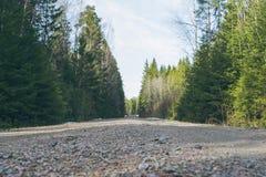 石渣路在密集的森林里 免版税库存图片