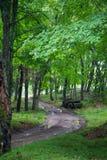 石渣路在森林里 免版税库存图片
