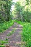 石渣路的看法通过森林 免版税库存照片