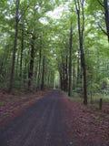石渣路通过厚实的森林 库存图片
