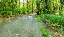 石渣道路穿过森林 免版税库存照片