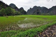 米种植园和石灰石峭壁在Ninh Binh,越南 库存照片