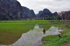 米种植园和石灰石峭壁在Ninh Binh,越南 免版税库存照片