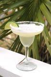 石灰玛格丽塔酒片式 库存照片